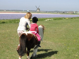 Ponyreiten in Nord Holland